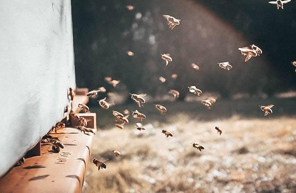 Beekeeping Hobbies For Women