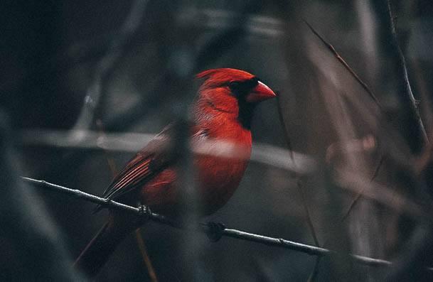 Bird Watching Hobbies For Females