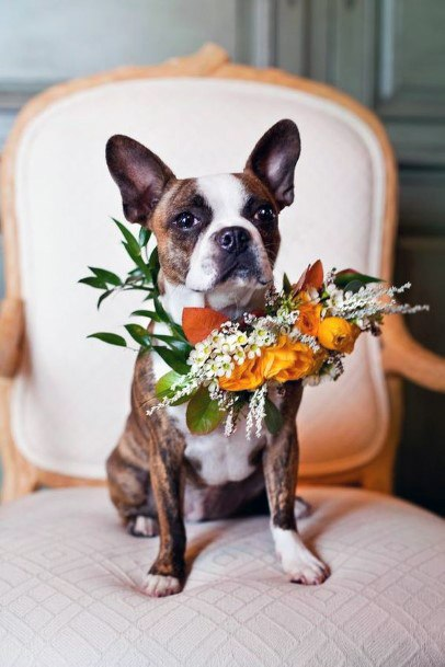 Fall Wedding Ideas Pet Friendly Orange Floral Collar Inspiration