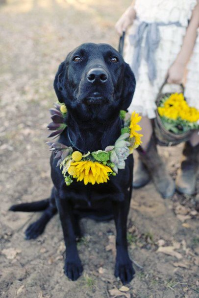 Fall Wedding Ideas Sunflower Collar For Pet Friendly Decor