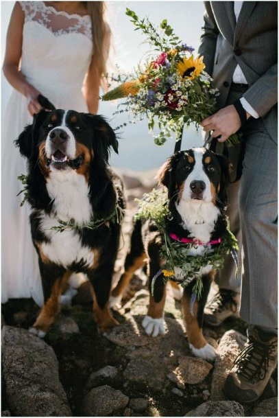 Pet Inclusive Ceremony Greenery Collar Inspiration Fall Wedding Ideas