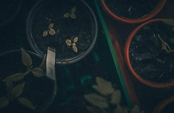 Plant Propigation Hobbies For Women