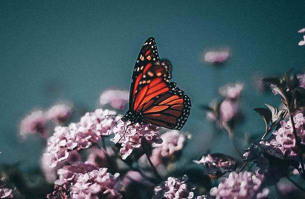 Visit A Butterfly Museum Date Ideas