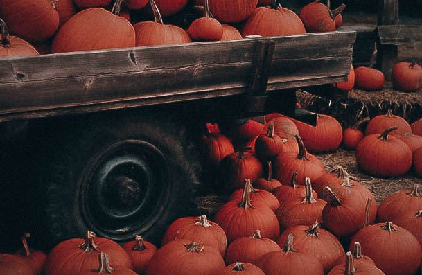 Visit A Pumpkin Patch Or Carve Them Day Date Ideas